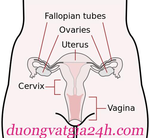 Hình ảnh âm vật của phụ nữ còn trinh 2